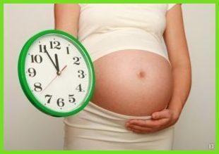 Сколько недель длится первая беременность?